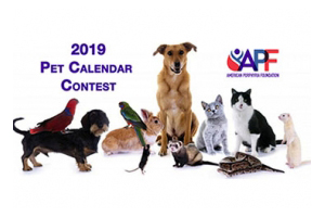 Update: Pet Calendar Contest! Enter TODAY!